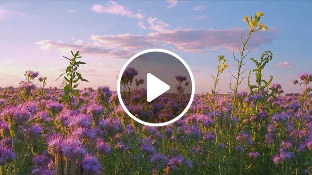 Lavender Manor Is Beautiful - Video & GIFs   fotografi alam, ilustrasi alam, pemandangan khayalan, nature aesthetic, flower aesthetic, nature gif, nature scenes, flower feild