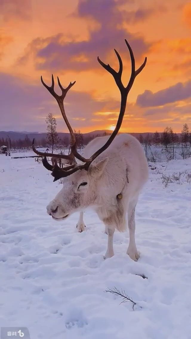 Lets protect nature There is no planet B. Amazing nature, Animals wild, Protect nature