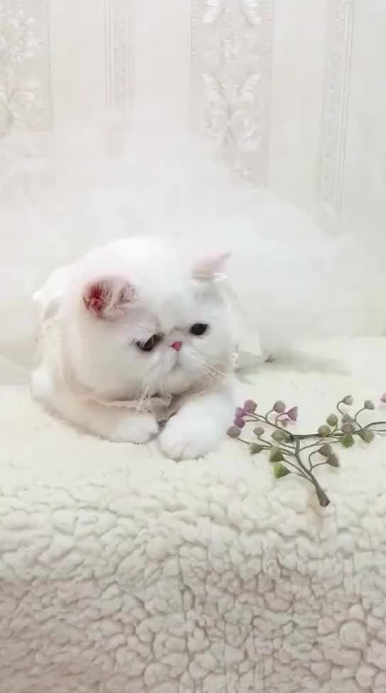Sprouting cat - Video & GIFs | cats,pets,animals,gatos,animaux,animales,cat,kitty,animal,dieren