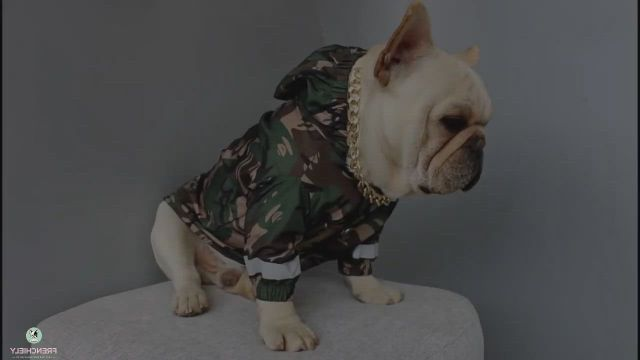 Best French Bulldog Raincoat Rain Jacket