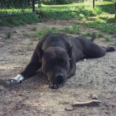 Cute dog in sad mood