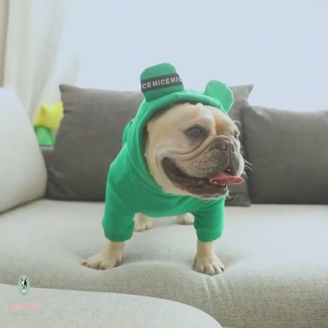 Cute French Bulldog Winter Clothes - Video & GIFs   cute french bulldog,bulldog clothes,dog winter clothes,lilac french bulldog,french bulldog clothes,french bulldogs,t shirt sewing pattern,dog coat pattern,dog raincoat,dog clothes patterns,dog jacket,dog hoodie