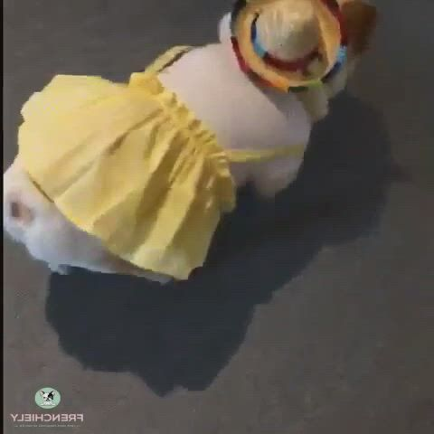 Cutest Dog Dress for Small Dogs - Video & GIFs   bulldog clothes,small dog clothes,dog fancy dress,pet clothes,french bulldog clothes,dog raincoat,dog clothes patterns,medium dogs,dog dresses,dog shirt,more cute
