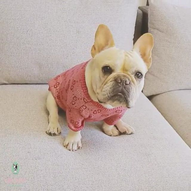Cutest pink dog sweaters
