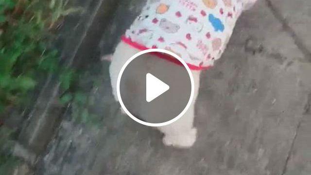 Dog Cartoon Hello Kitty Shirt - Video & GIFs | cat shirts, dog shirt, small dog sweaters, dog raincoat, puppy clothes, cute animal videos, cartoon dog, medium dogs, dog dresses