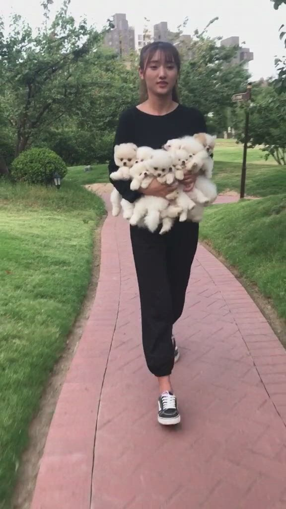 When a bunch of puppies run behind you - Video & GIFs   cute baby dogs,cute little puppies,cute animals puppies,cute teacup puppies,cute baby puppies,super cute puppies,fluffy animals,tiny puppies,teacup pomeranian,pomeranian puppy,cute small dogs