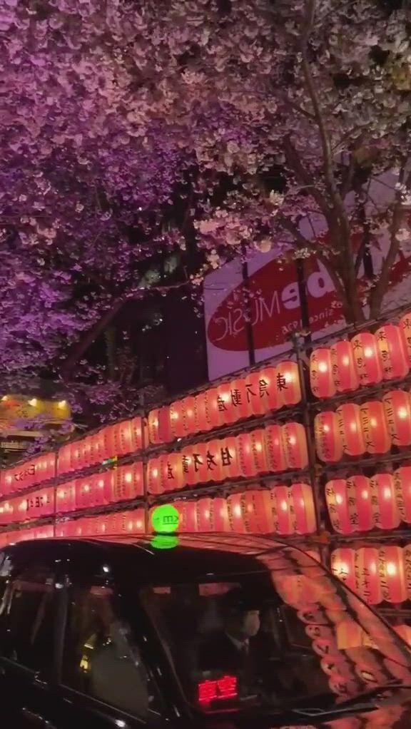 Sakura in the night of tokyo - Video & GIFs | aesthetic japan,japan icon,japan sakura,night aesthetic,japanese aesthetic,city aesthetic,aesthetic ,aesthetic anime,japan places to visit,dubai vacation