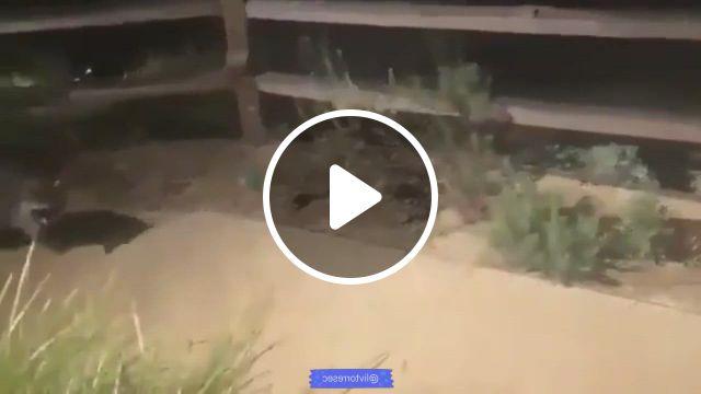 Arriba Las Manos - Video & GIFs | raccoon funny, cute animals, cute funny animals, cute baby animals, funny cute, cute dogs, cute animal , cute raccoon, animal jokes, cute creatures