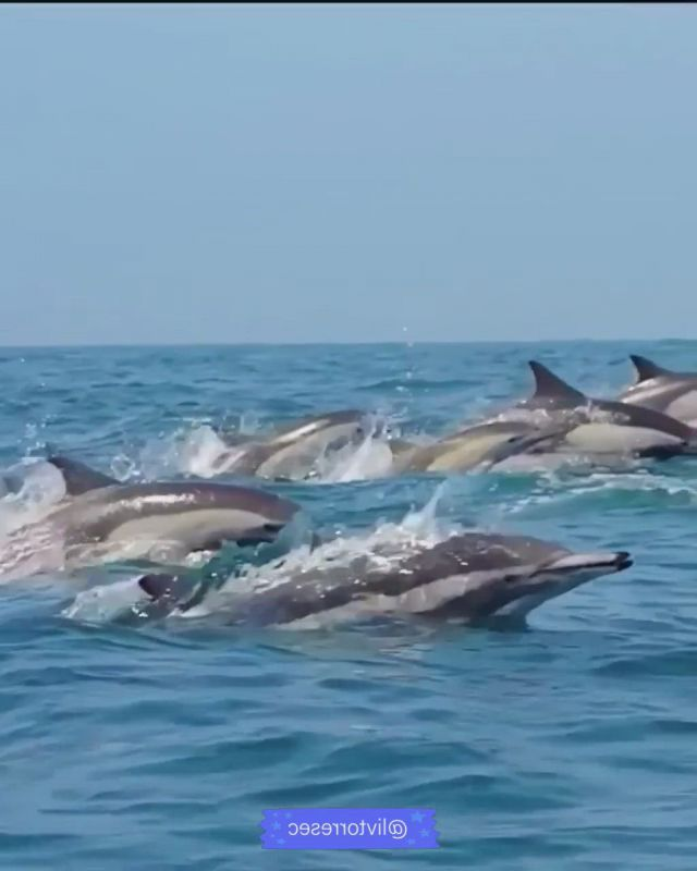 Dolphins - Video & GIFs   animals beautiful,dolphins,marine animals,relaxing gif,nature gif,purple aesthetic,fantasy artwork