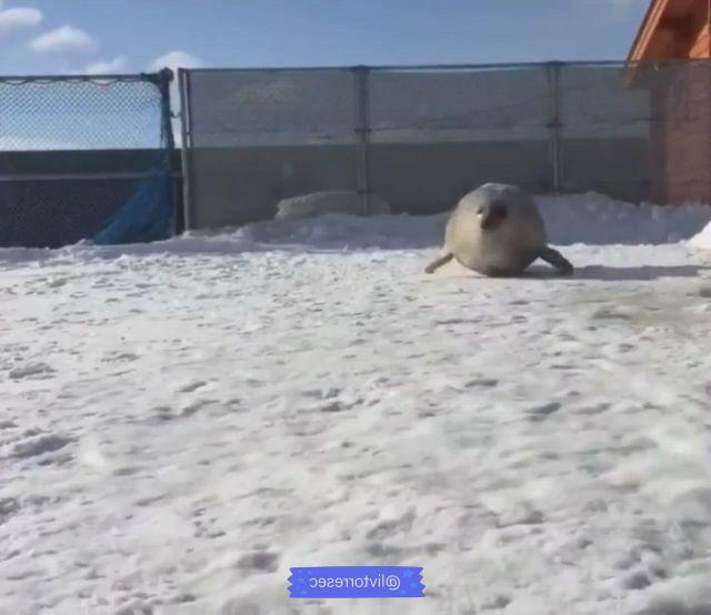 Seal cute animals - Video & GIFs   animals,cute animals,cute,polar bear,seal,angel,fotografia,pretty animals