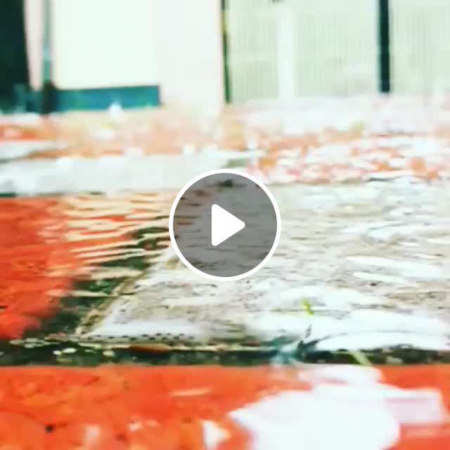 Always Love Betta Fish - Video & GIFs | betta fish types, betta fish, betta