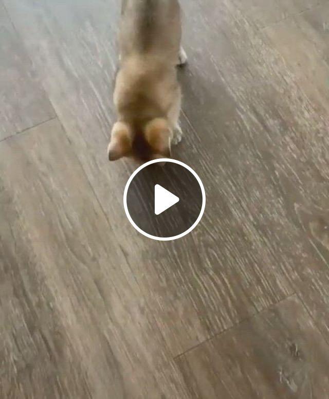 Freaked Out By The Treat - Video & GIFs | animals beautiful, kitten, corgi, pets, tik tok, mini, curvy girl fashion, cutest animals