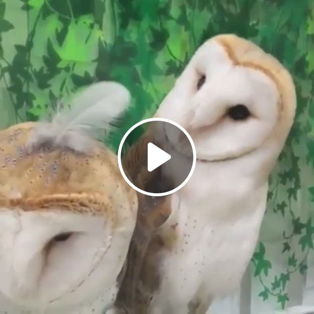 Hold On, You Got Something On Your Head - Video & GIFs   cute baby animals, funny animal , cute animals, cute little animals, cute funny animals, rare animals, animals and pets, creepy animals, dangerous animals, strange animals, cute animal , funny animal memes
