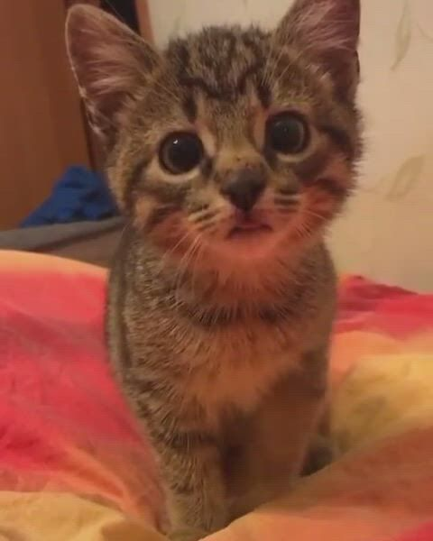 Cute little tongue
