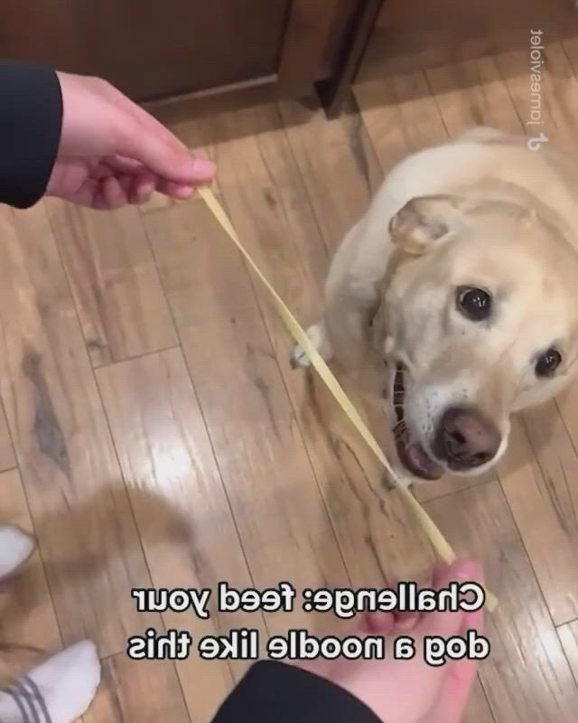 Noodles time, funny animal , funny animals, dogs, noodles, dogs and puppies, your dog, funny stuff, lol, content, memes