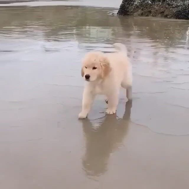 Scared of waves
