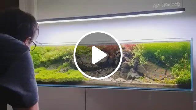 20 Gallon Aquarium Fish Compatibility - Video & GIFs | fish tank plants, fresh water fish tank, aquarium fish, aquarium garden, aquarium setup, aquarium kit, aquarium design, 20 gallon aquarium, acrylic aquarium, fish tank design, aquatic turtles, shrimp tank