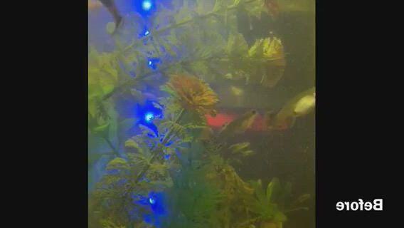 Best filter for 30 gallon aquarium - Video & GIFs | 45 gallon fish tank,aquarium,best aquarium filter,29 gallon aquarium,saltwater aquarium,freshwater aquarium,cool fish tanks,tank you,deep blue sea,fresh water
