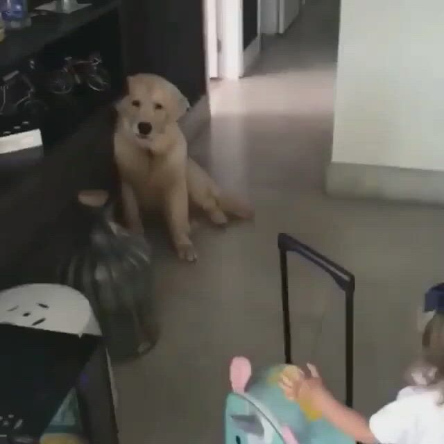 Pure love between dogs and kids