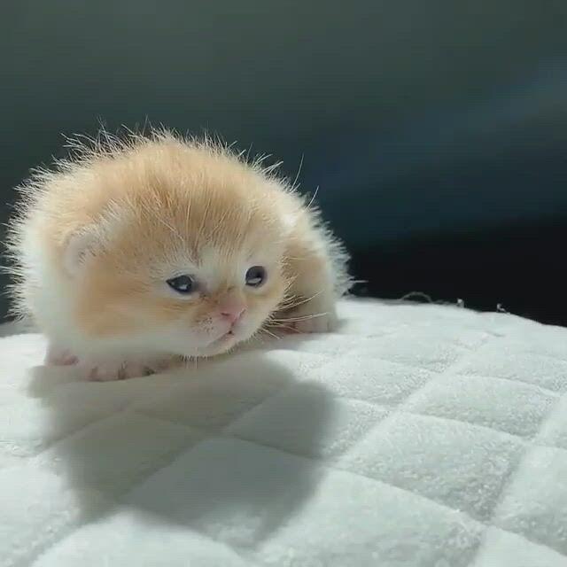 Tiny little kitty