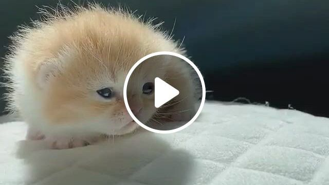 Tiny little kitty, cute baby animals, funny animals, cute baby cats, funny cute cats, cute kitten gif, cute little animals, cute cats and kittens, cute funny animals, kittens cutest, fluffy kittens, white cat breeds