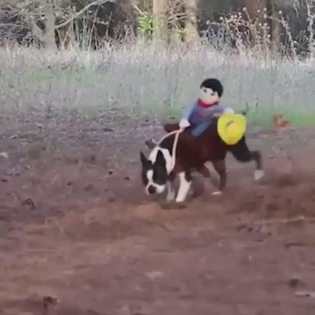 Good boy's cowboy rider cosplay - Video & GIFs   halloween costume anime,cosplay costumes,anime movies,mask online,wigs online,anime costumes,halloween cosplay,halloween costumes,nerd stuff,anime characters,facebook
