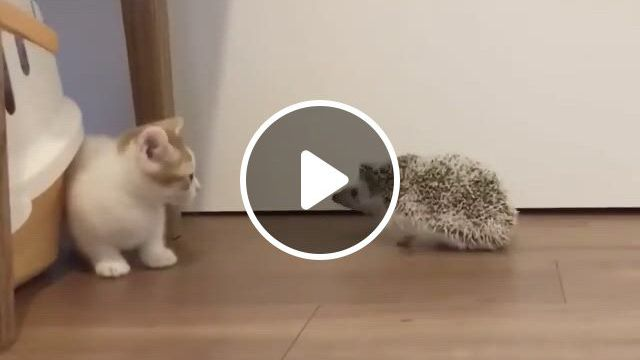 Please Tell Me They Became Friends Eventually - Video & GIFs | cute baby animals, cute animals, cute little animals, funny animal memes, funny animal , funny cats, funny, cute funny animals, cute cats, kittens cutest