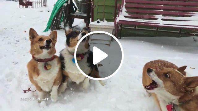 Snow Loving Friends - Video & GIFs   corgi gif, corgi, cute animals, funny animal , cute funny animals, cute baby animals, animals and pets, cheap puppies, buy puppies, i love dogs