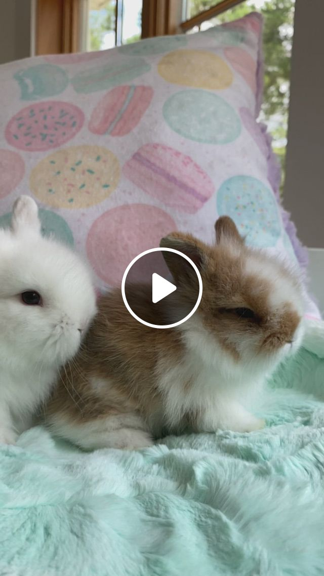 Cute Bunny Snuggles - Video & GIFs   baby animals super cute, cute animals, cute baby bunnies, cute little animals, cute funny animals, cute babies, funny bunnies