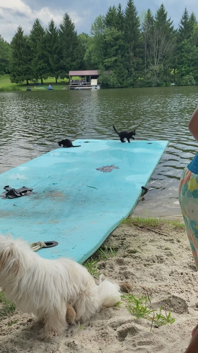 Cute Kittens playing by the lake - Video & GIFs   pet goat,pet pig care,cute baby animals,farm animals,animals and pets,pet care tips,dog care,miniature pigs,house rabbit,pet pigs,kittens playing