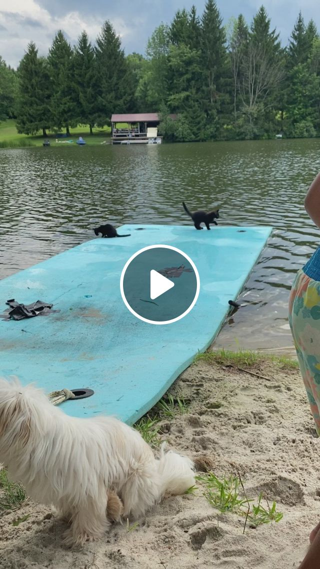 Cute Kittens Playing By The Lake - Video & GIFs   pet goat, pet pig care, cute baby animals, farm animals, animals and pets, pet care tips, dog care, miniature pigs, house rabbit, pet pigs, kittens playing