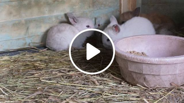 Cute White Baby Rabbit - Video & GIFs   cute baby animals, cute animals, otters cute, animals and pets, funny animals, guinea pig toys, baby sloth, animal jam, baby goats, exotic fish, cute little animals