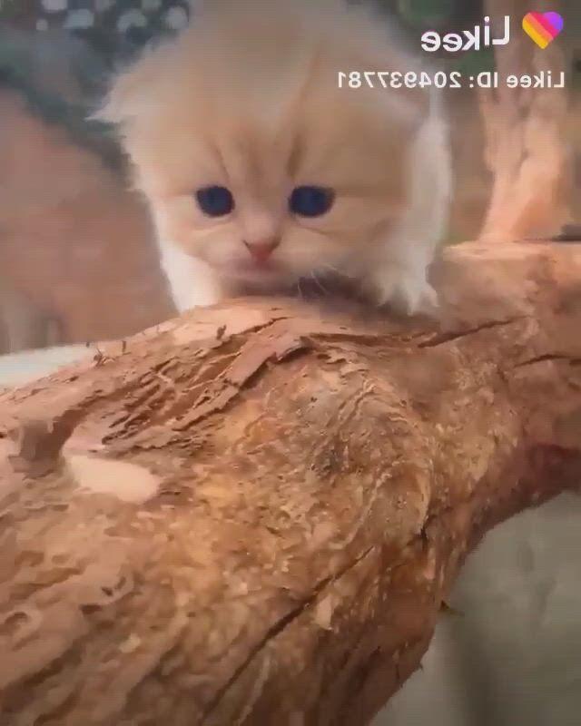 Kittens cutest baby - Video & GIFs | kittens cutest baby,cute baby animals,cute cats,cute little kittens,cute baby cats,cute kitten gif,cute cats and kittens,super cute kittens,cute kawaii animals,baby animals super cute,cute funny animals,cute little animals