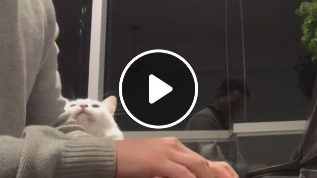 This Kitty Likes To Play The Piano - Video & GIFs | gatos bonitos, gatos, animales, creative instagram stories, instagram story, crazy cat lady, crazy cats, baby kittens, cat gif, funny shit, in this world, cute cats