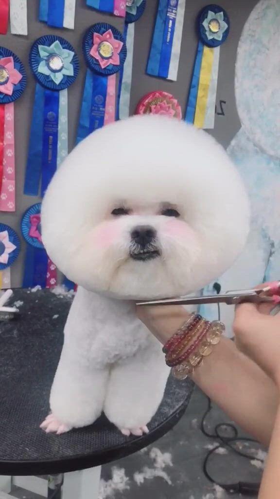 Dog repair hair - Video & GIFs   dogs,dog memes,dog quotes,hair repair,pet grooming,dog art,dog treats,dog lovers,teddy bear,pets
