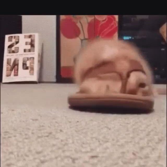 Flip flop express
