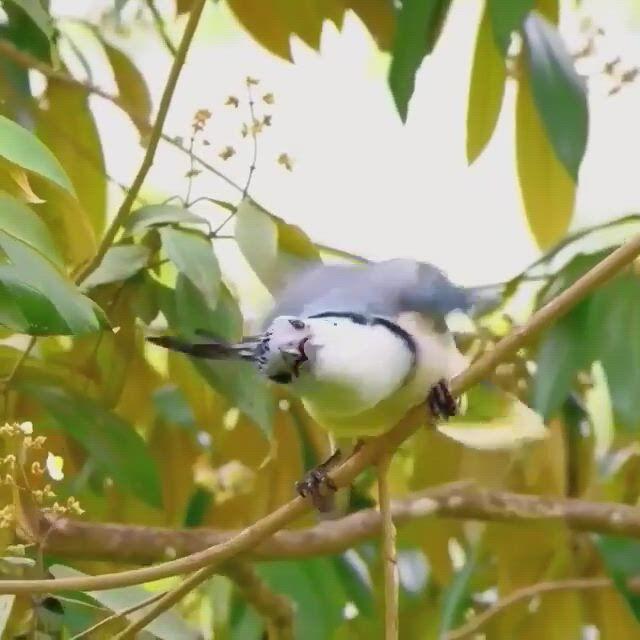 Beautiful bird - Video & GIFs   beautiful birds,most beautiful birds,animals,phoenix bird,funny birds,amazing nature,statues,sea shells,dog cat,exotic,wings