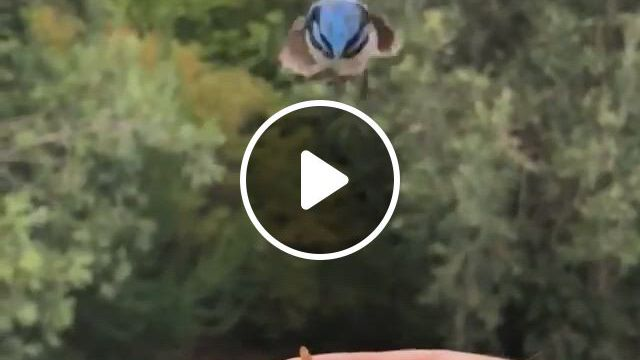 Beautiful Bird - Video & GIFs | beautiful birds, cute animal , nature animals, most beautiful birds, animals beautiful, animals and pets, funny animals, cute animals, funny parrots, bird types