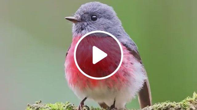 Beautiful Birds - Video & GIFs   passaros bonitos, passaros domesticos, de animais selvagens, weird birds, funny birds, all birds, cute birds, pretty birds, little birds, beautiful birds, animals beautiful, cute animals