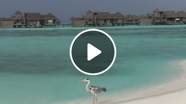 Sea Beach And Bird - Video & GIFs | paisagens da natureza, natureza, paisagens, sea shells, birds, , beach, outdoor decor, animales, the beach, bird, seaside