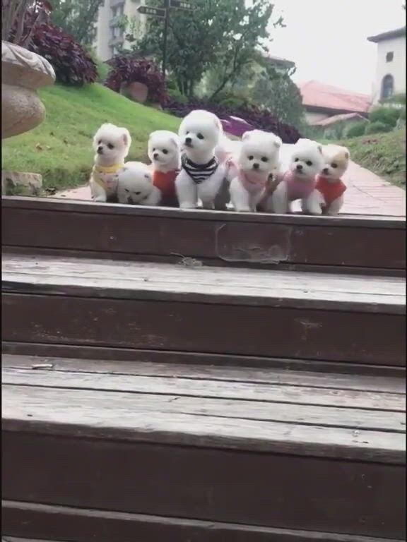 Sweet dog puppies - Video & GIFs | schnauzer dogs,beagle dog,dachshund dog,dachshunds,unique dog breeds,cute dogs breeds,alaska dog,spitz dogs,samoyed dogs