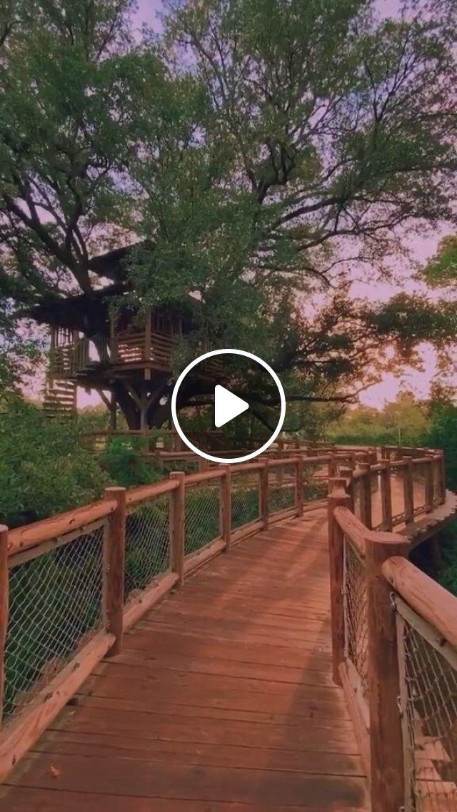 Tree House - Video & GIFs | beautiful nature scenes, beautiful tree houses, aesthetic movies, aesthetic , aesthetic art, model house plan