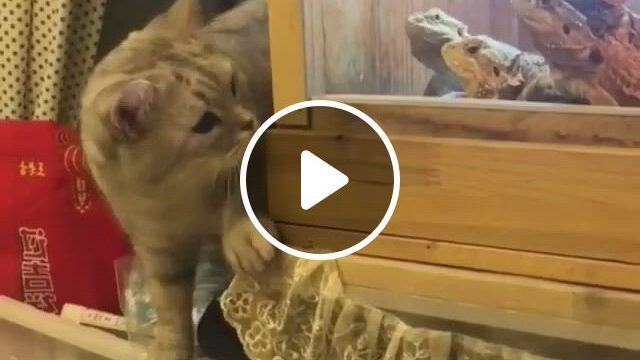 Cute Fight - Video & GIFs   funny animal , cute funny animals, animal memes, cute baby animals, funny cute, animals and pets, cute kittens