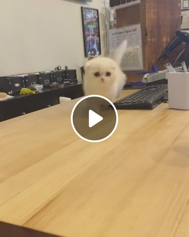 Cute white kittens on the table, funny animals, cute baby animals, funny cat compilation, super cute animals, cute funny animals, funny cats, baby kittens, cute cats and kittens, kittens cutest, beautiful kittens, animals beautiful