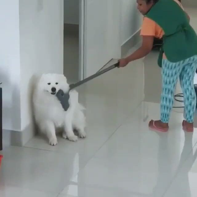 Dog cleaning service
