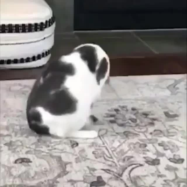 Funny cat yoga