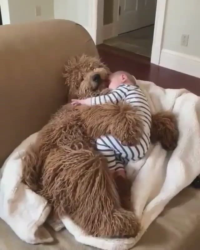 Cute baby with a sweet dog - Video & GIFs | cute animals,dog gifs,cute baby ,vizsla puppies,cute puppies,dogs pitbull,funny babies,cute babies,labrador husky,expresso,puppy breeds