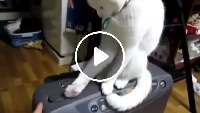 The world's most patient cat, animals, funny cat, patient, radio