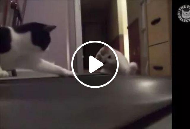 Hey bro, don't spoil it, animals, funny cat, treadmill