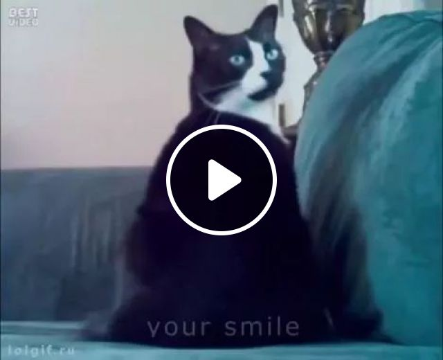 Nobody? I Met a Ghost, meow, animals, cat, prank, sofa, halloween